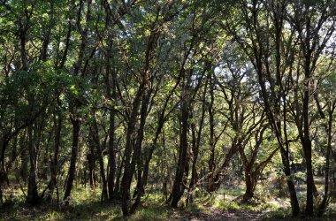 Adolfo dominguez contin a vistiendo de verde la tierra for Adolfo dominguez acciones