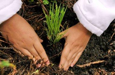 Reforesta plant m s de rboles con 620 voluntarios for Como se desarrolla un arbol